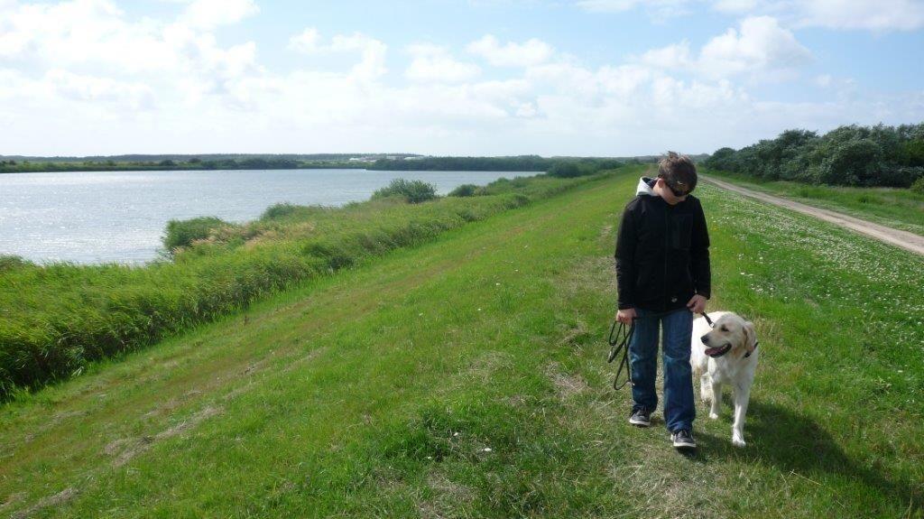 Photo of Sylt: Mit dem Hund quer durchs Vogelschutzgebiet