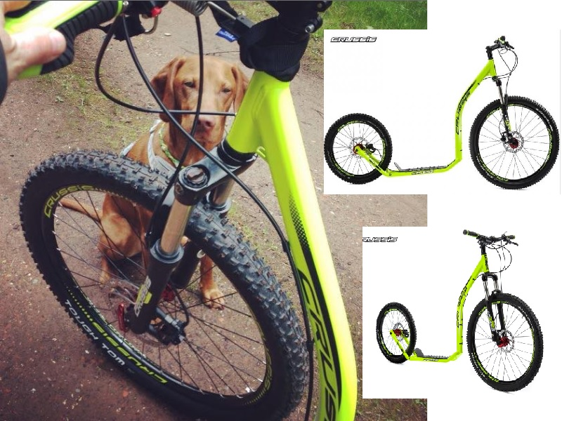 Photo of Tipps & Tricks für Outdoor-Vierbeiner – Dog-Scooting