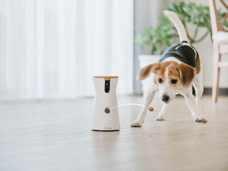 Photo of Furbo – die interaktive Kamera für Hunde