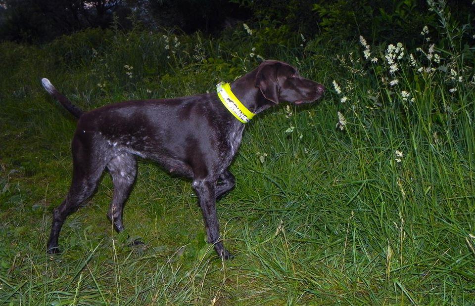 Jagdnasenshop Hunde Signalhalsband