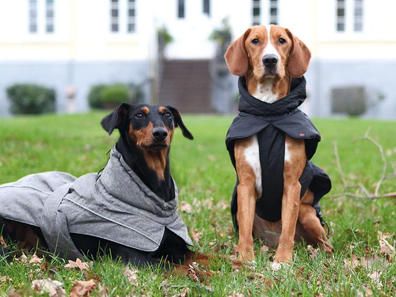 Photo of Hundemäntel – Sinnvoll oder modischer Schnickschnack?