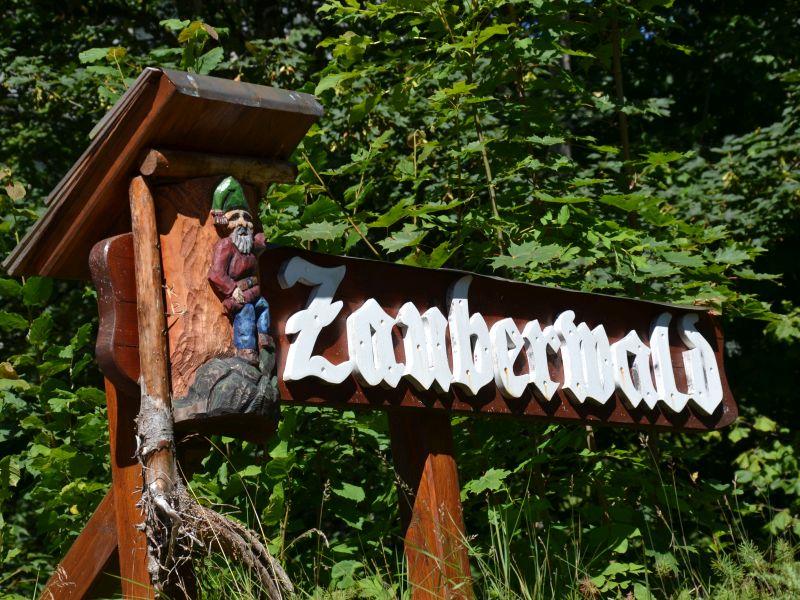 Photo of Mystisch-romantische Wanderung durch den Zauberwald