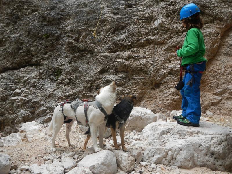 Klettersteigset Hund : Cortina d`ampezzo richtig klettern mit hunden be outdoor