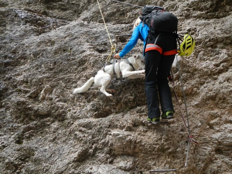 Photo of Cortina d`Ampezzo: Richtig Klettern mit Hunden