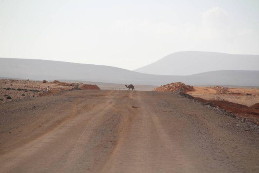 DesertRallye2018_Tag9_Marokko_3