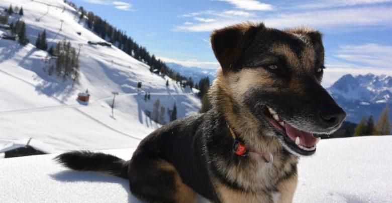 Photo of Großer be-outdoor.de-Fotowettbewerb: Schickt uns Eure tollsten Hunde-Winterbilder