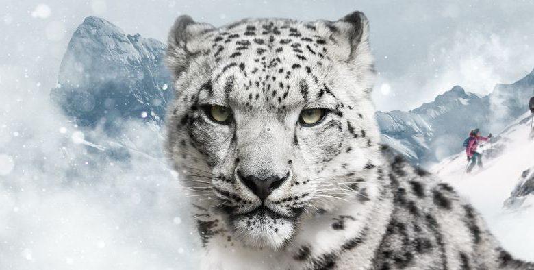 Photo of Skitourengehen für den Schneeleoparden
