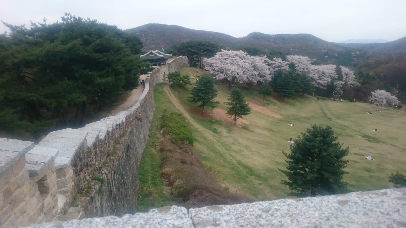 Reisetagebuch Elena und Mateo - Sangdangsanseong Fortress zur Kirschblütenzeit