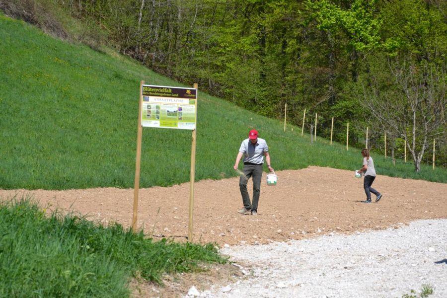 Biosphärenregion Berchtesgadener Land - Wildbienenprojekt in der Ramsau - Die Aussaat der Magerwiese