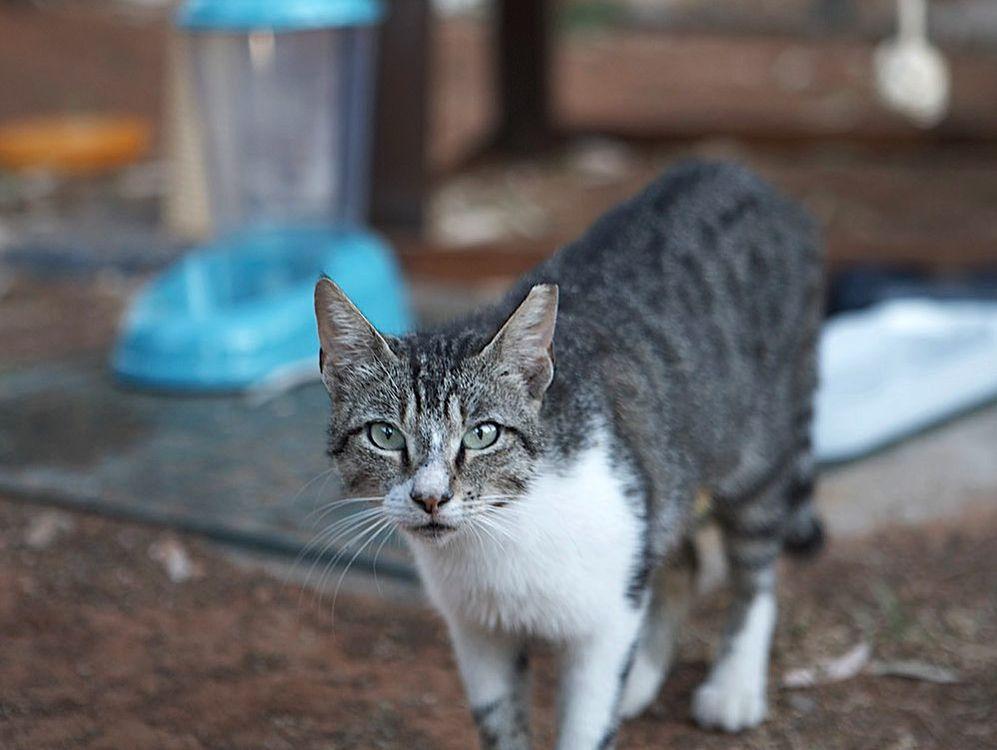 Cat Cafe (c) Cretan Malia Park