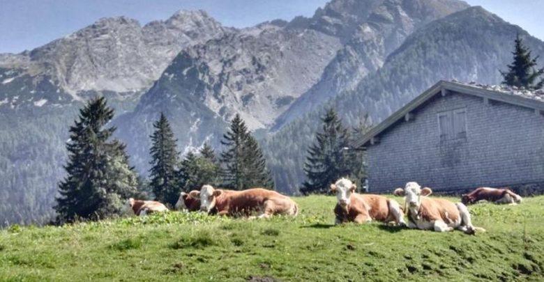 Photo of Bergtouren im Sommer 2020 – Tipps vom DAV