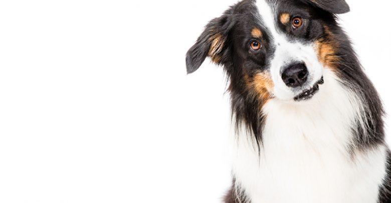 Photo of Hundefotos mit Seele