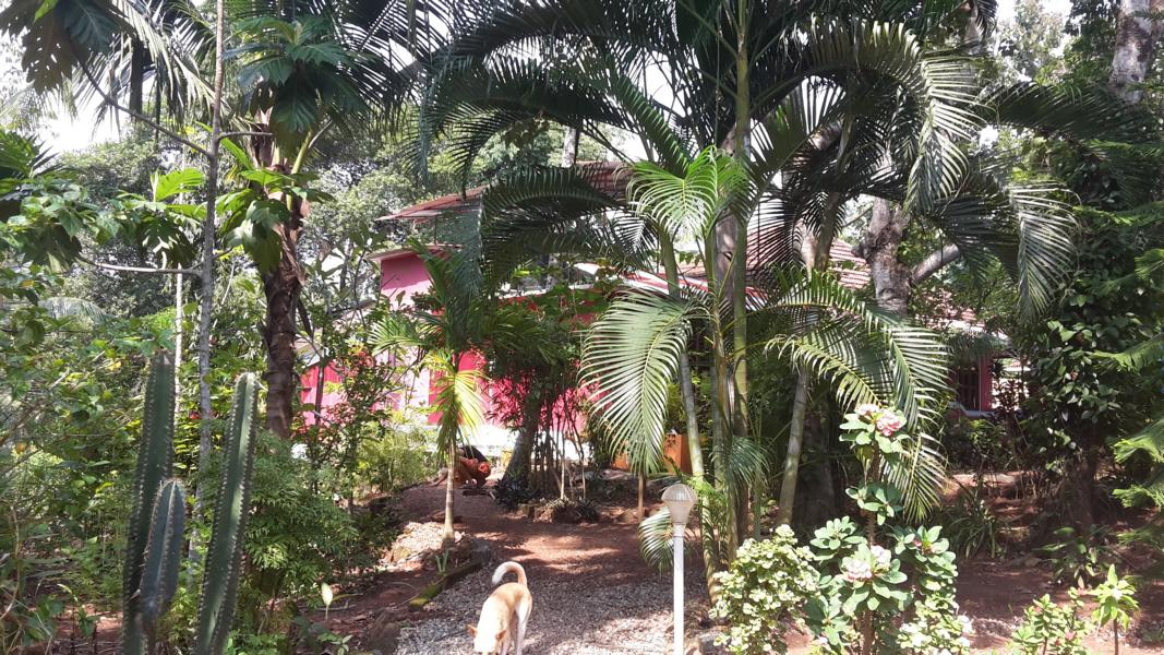 (c)Dreamcatcherhouse in Kerala / Indien
