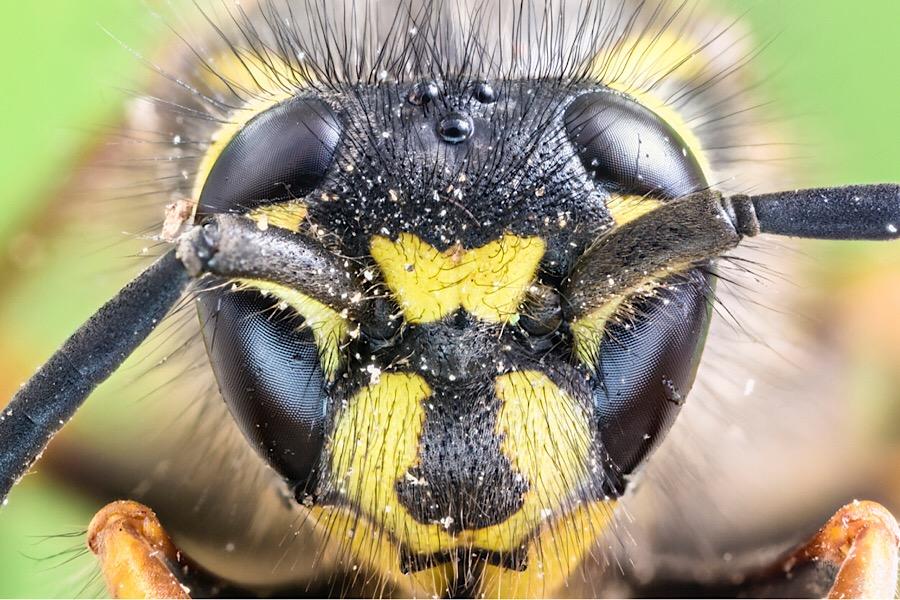 Natürlich gegen Wespen