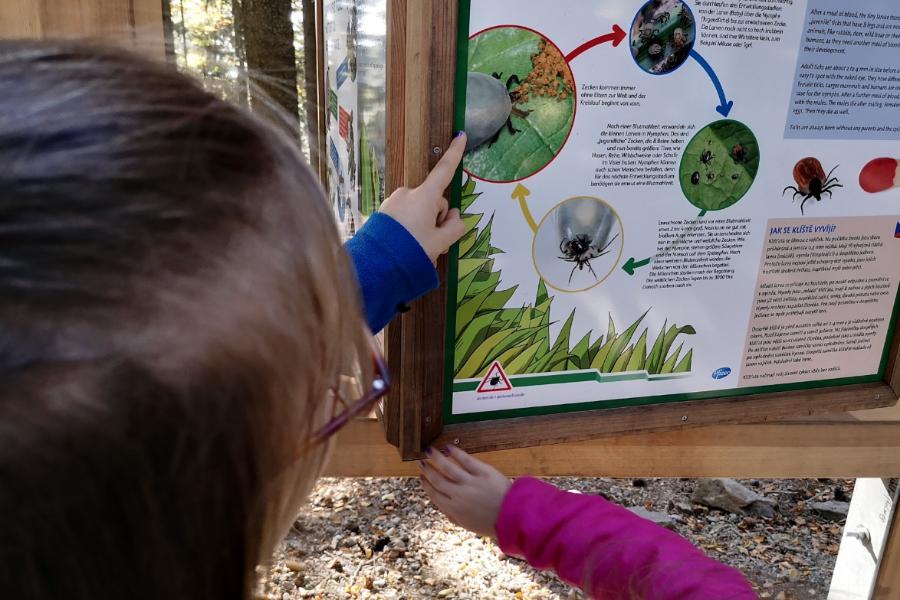 WaldWipfelWeg - Wie gefährlich sind Zecken wirklich? ©be-outdoor