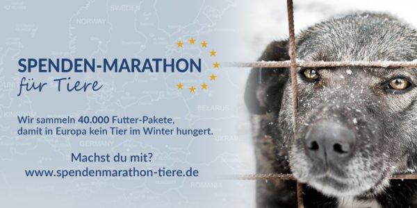 Photo of Spenden-Marathon für Tiere – 40.000 Futterpakete
