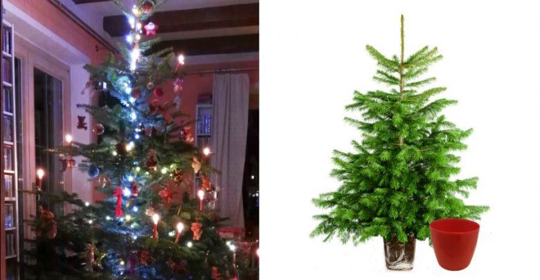 Weihnachtsbaum Ab Wann.Weihnachtstipps 2018 Der Miet Mich Weihnachtsbaum Be Outdoor De