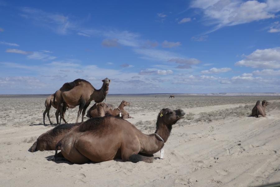Reisetagebuch Elena und Mateo - Ustjurt Plateau, Kasachstan