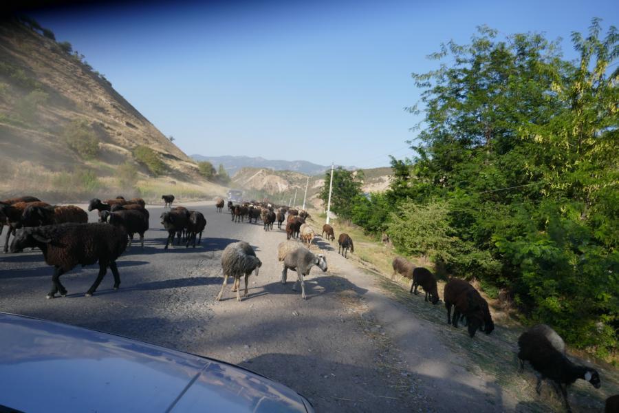 Reisetagebuch Elena und Mateo - auf dem Weg nach Arslanbob