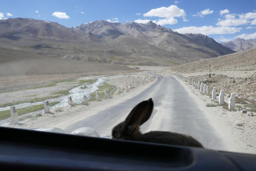 Reisetagebuch Elena und Mateo - per Anhalter auf dem pamir Highway über die M41, der tierische Begleiter unseres LKW-Fahrers