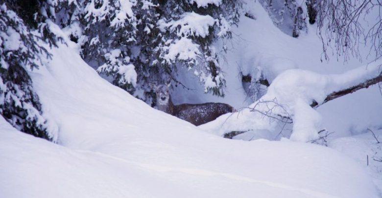 Photo of Notfallplan gegen das große Sterben im Bergwald