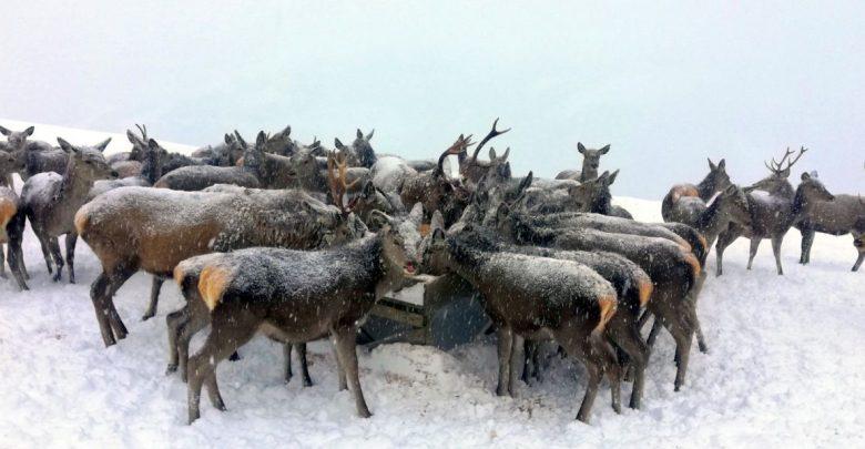 Photo of Wildtierfütterungen – Über die Notlage der Tiere im Schnee