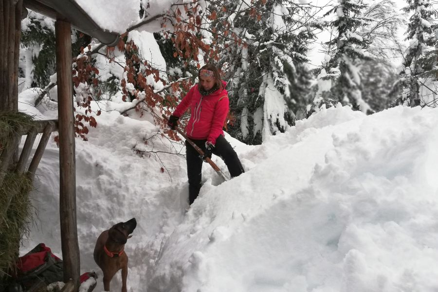Wildtierfütterungen in Berchtesgaden im Winter 2019