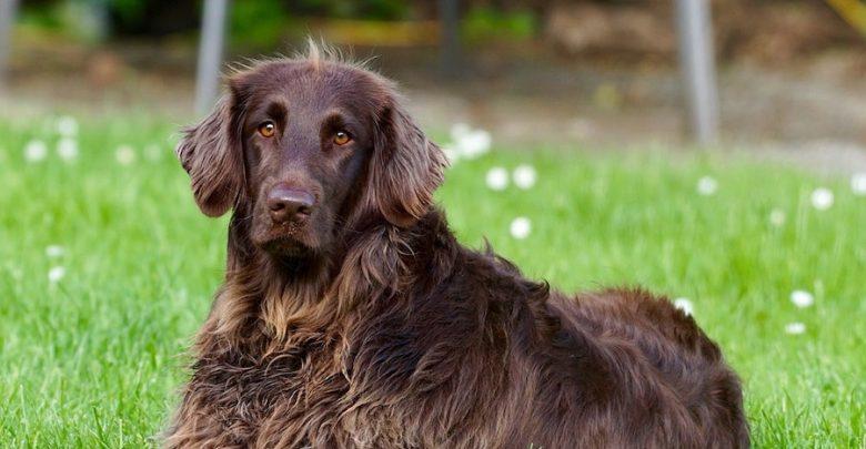 Photo of Tierliebe Gastgeber heißen Hund und Herrchen willkommen