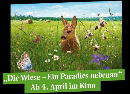 Photo of Frühjahrs-Diät lockt Rehe an die Landstraße