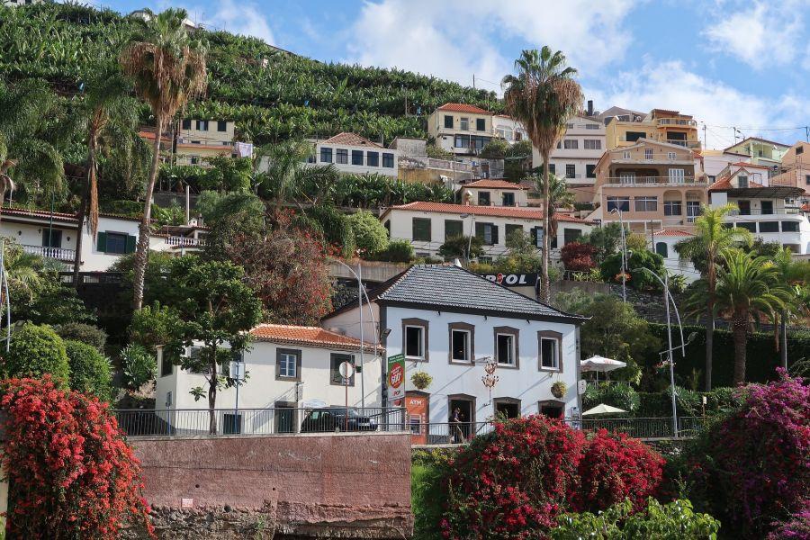 Fruehling auf Madeira (c) Pixabay