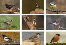 Photo of Stunde der Wintervögel – Mitmachen bei Vogelzählung