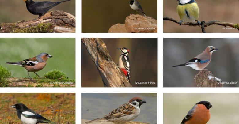 Photo of Gefahr für die Blaumeise? – Jetzt Vögel zählen!