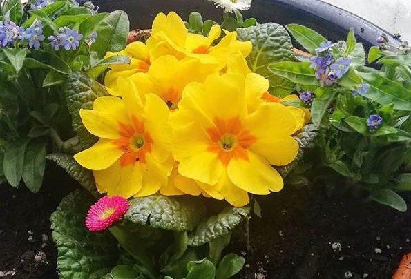 Photo of Sag´s mit Pflanzen…
