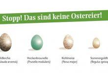 Photo of Viele bunte Ostereier? Vorsicht! Nicht jedes Ei ist ein Oster-Ei!