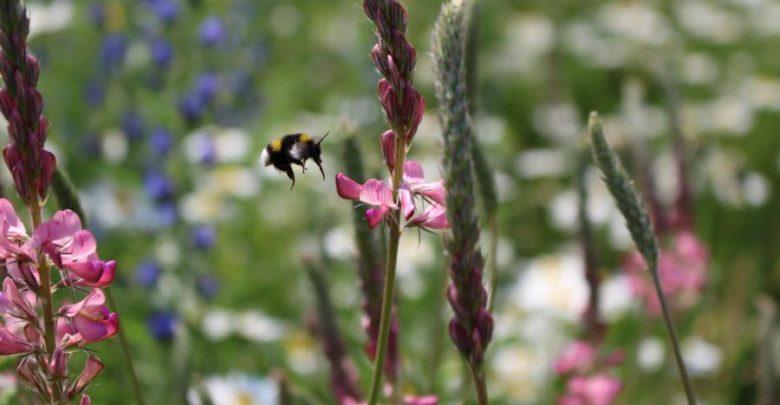 Photo of Wusstet Ihr das? Mulchen schadet der Artenvielfalt!