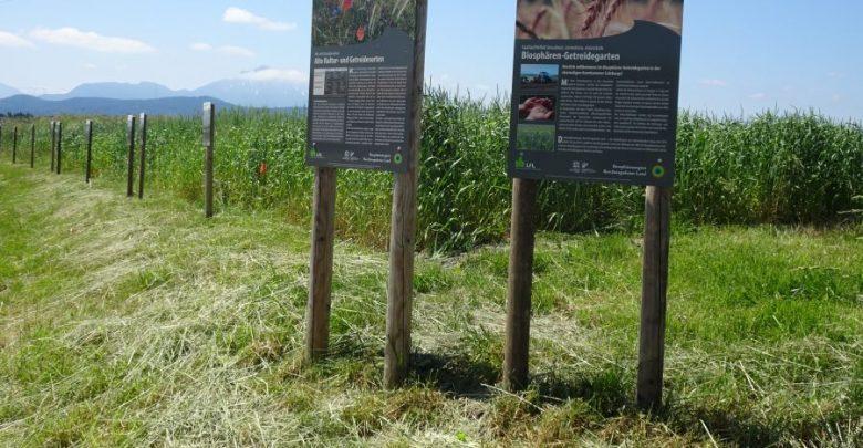 Photo of Biosphären-Getreidegarten – Saatgutvielfalt bewahren