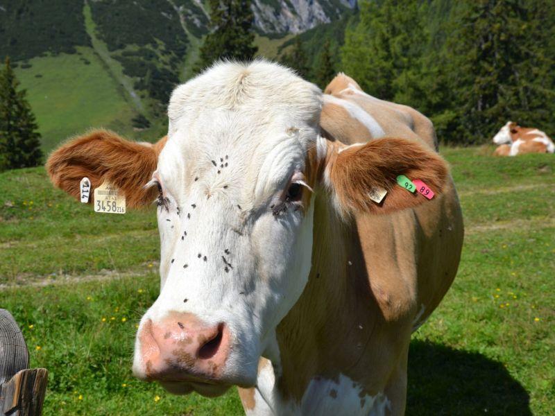 (c)be-outdoor.de - Knigge für den richtigen Umgang mit Almtieren - Profi-Tipps aus dem Wanderparadies Zauchensee