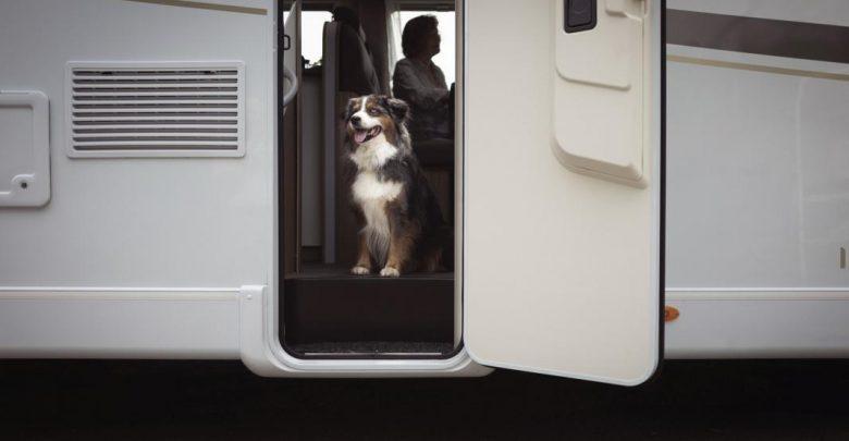 Photo of Vierbeiner auf Tour – Die schönsten Campingplätze für Hunde