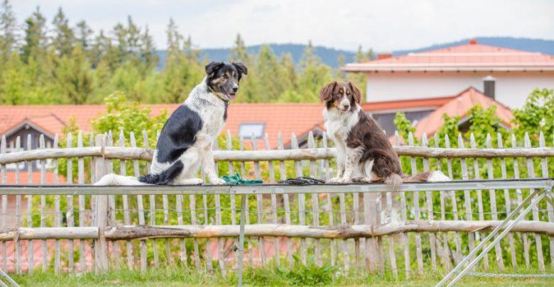 Photo of Hundstage – Urlaubsdestinationen für Hundefreunde