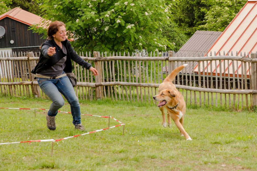 (c)Wilde & Partner - longieren im Hundehotel