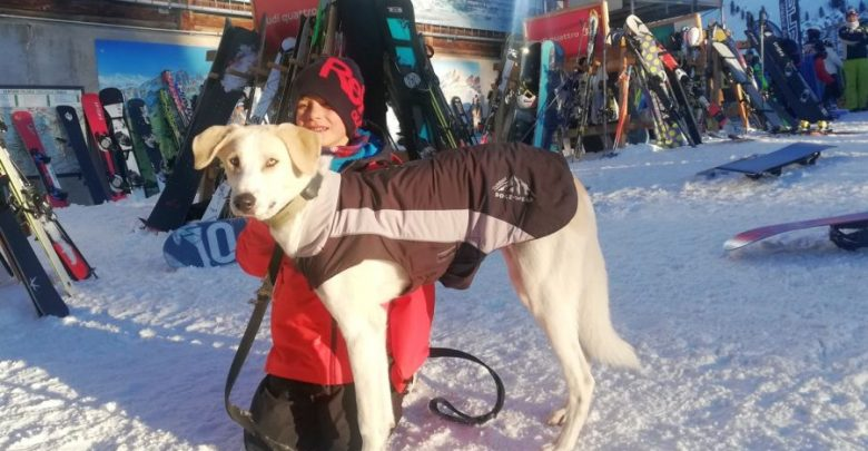 Photo of Aktuell im Test – Wolters Skijacke Dogz-Wear