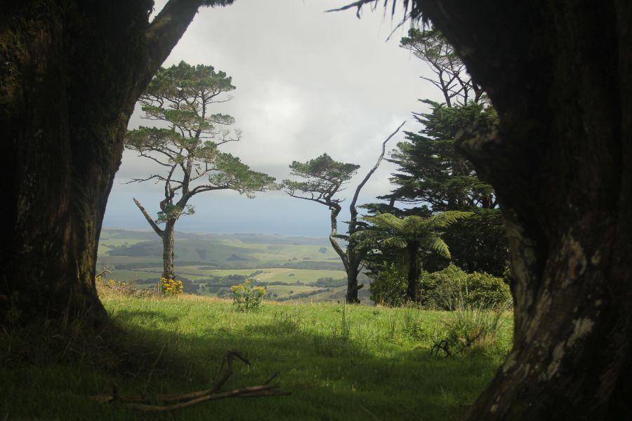 (c)Pupu Rangi Nature Sanctuary 2018 - Neuseeland