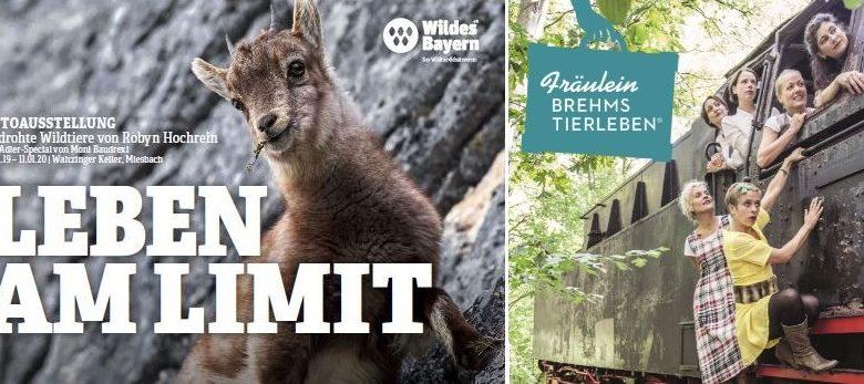 Photo of Leben am Limit – Midissage mit Fräulein Brehms Tierleben