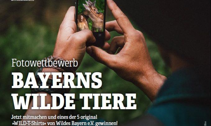 Photo of Fotowettbewerb Bayerns Wilde Tiere