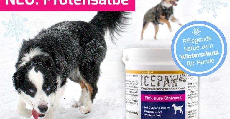 Photo of Gegen Risse und Trockenheit: Pink Pure Ointment von Icepaw