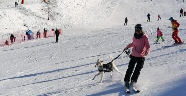 Photo of Produkttest – Wolters Skijacke Dogz Wear