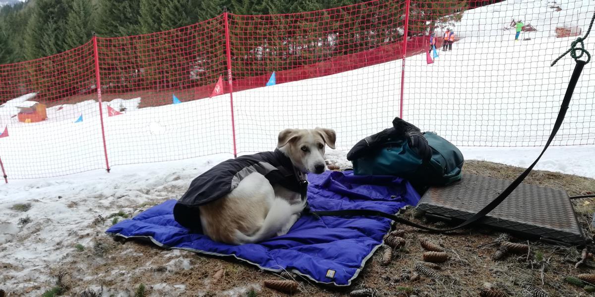 (c)be-outdoor.de Ruffwear Hundedecke Clear Lake