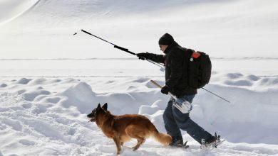Photo of 2. Weltmeisterschaft der Lawinenhunde am Rifflsee