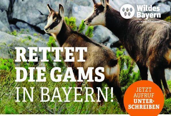 Photo of Rettet die Gams – Unterschriftenliste vom Verein Wildes Bayern e.V.