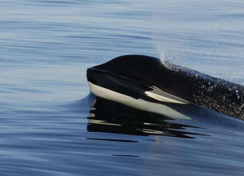 (c) hellocanaryislands - Wal-und Delfinbeobachtung auf den Kanaren